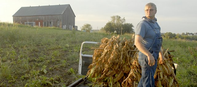 Dan Morgan looks over his small plot of burley tobacco in the golden glow of early morning. Morgan, 51, is among a few farmers in the Weston, Mo., area who still raise tobacco.