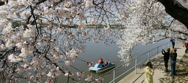 Visitors stroll under the cherry blossoms along the Tidal Basin in Washington in this March 30, 2007, file photo. The trees are expected to be in peak bloom when the National Cherry Blossom Festival begins on March 29, but 30 years ago the trees usually waited to bloom until around April 5.