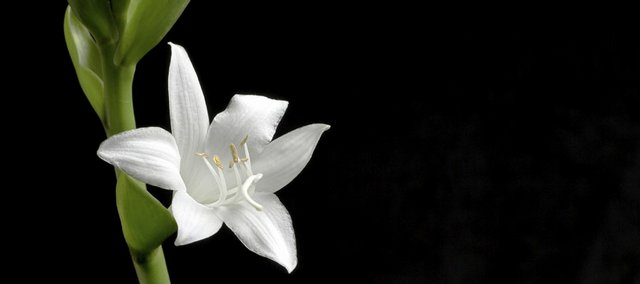 The plantain lily, more commonly known as a hosta, is a quintessential classic garden shade plant.