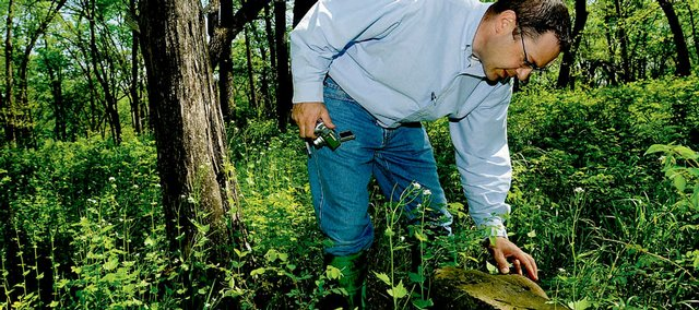 Monte Soukup, Kansas University Endowment Association's vice president for property management, looks for lettering on an old headstone during a tour of an abandoned family cemetery last week south of Clinton Lake. KU Endowment, which owns the property, plans to clean up the overgrown landscape at the cemetery before Memorial Day.
