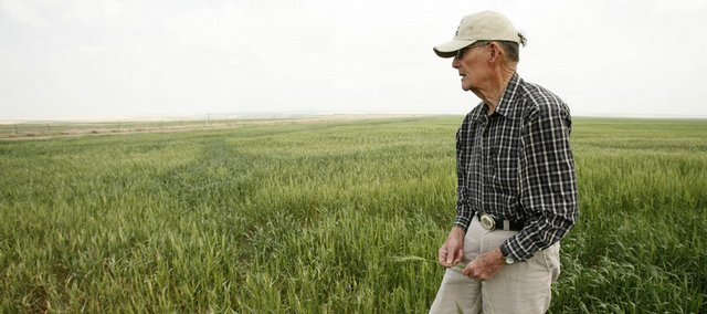 Rod Bentley checks wheat Friday in his field near Dighton. With record high crop prices coupled with record high oil prices, farmers with both are seeing a boom in the rural economy.