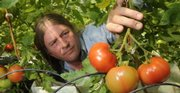 Kevin Irick, who offers produce at the Downtown Lawrence Farmers' Market, looks over some of his hot house tomatoes.