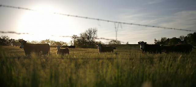A Homeland Security Department study examining the possible effects of a foot-and-mouth disease outbreak from proposed research facilities locations in the continental U.S. was released Friday. The study concluded that economic losses in an outbreak of foot-and-mouth disease could surpass $4.2 billion if the lab, currently located in New York, were moved near livestock herds in Kansas or Texas.