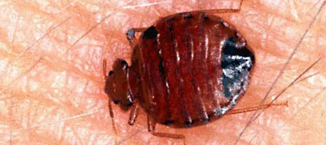 Bedbugs have made their way throughout the United States, spreading from the major cities where the infestations started a few years ago.