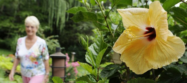 A large golden hibiscus lines a pathway through Kirsten Rosengaard's backyard garden.