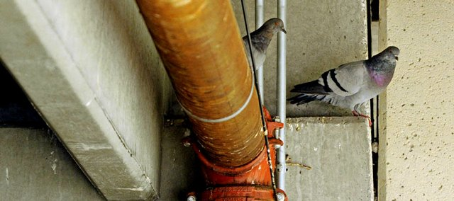 Pigeons are causing problems in Kansas University parking garages. KU officials are seeking advice from exterminators on nonlethal deterrents to roosting.