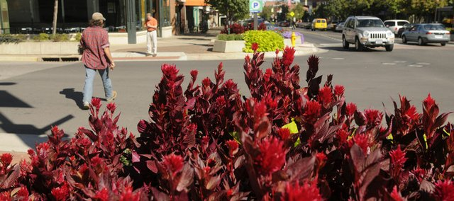 Downtown planters are filled with a variety of plants that show their vibrant colors as fall approaches, including new look celosia.