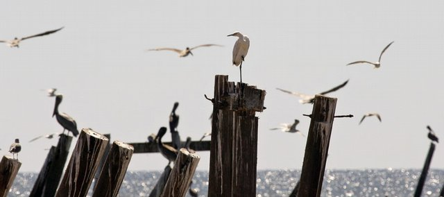 Birds fly around as others sit on a pier damaged by Hurricane Ike on Thursday in Gilchrist, Texas. One of North America's renowned bird migration and bird-watching areas is strangely silent in the aftermath of Hurricane Ike.