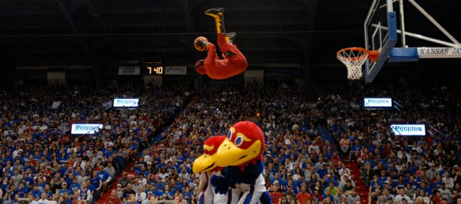 Little Jay and Big Jay appear during Late Night in the Phog on Oct. 12, 2007, at Allen Fieldhouse. The Kansas University mascot will participate in a national contest in January.