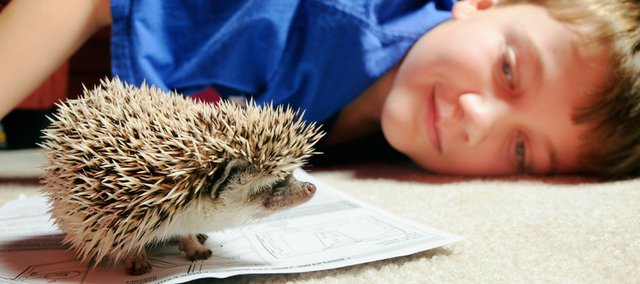 After lobbying the city to make hedgehogs legal, 11-year-old Judson King is now the proud owner of his own pet hedgehog, Little Luke. 