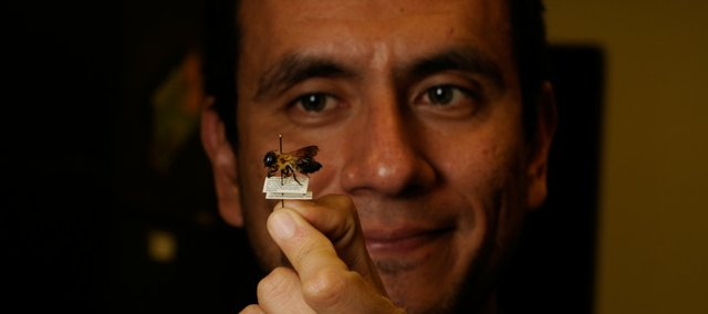 Ismael Hinojosa-Diaz captured the first giant resin bee found west of the Mississippi River. In 2005, he and four colleagues published a study predicting such a finding. Hinojosa-Diaz is a doctoral student at KU.