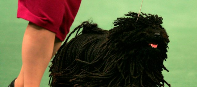 A puli named Field Of Dreams was top dog among the herding group Monday and will compete for best in show today at the 133rd Westminster Kennel Club dog show in New York.