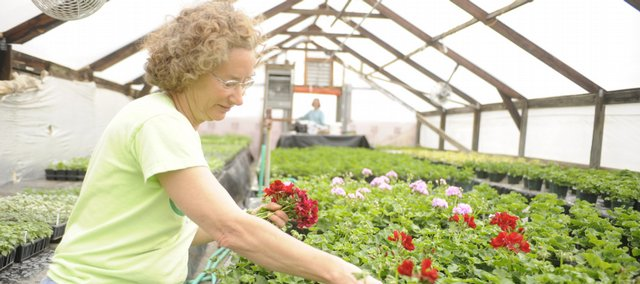 Jozie Schimke, who works at Henrys' Plant Farm, 248 North 1700 Road, picks blossoms to further plant growth. The business is experimenting with more patio-type vegetables in anticipation of a boon of DIY vegetable gardening.