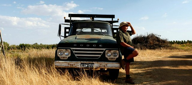 "Frank Eddy leans on his vintage Dodge truck near a large pile of uprooted peach trees that he will burn this winter on his orchard near Shepparton in Victoria, Australia. Scientists say problems in Australia epitomize the ""accelerated climate crisis"" that global warming models have forecast."