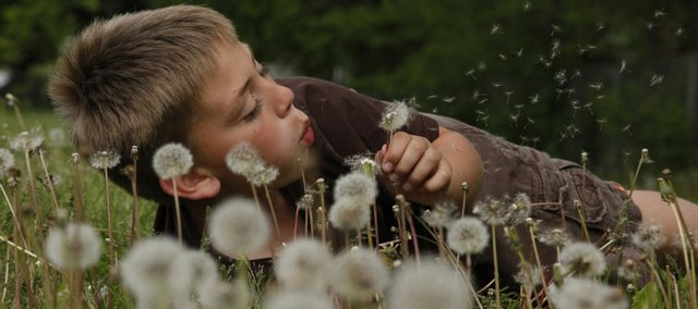 Caleb Miller, 10, amuses himself with dandelions as he waits for a ride home Monday near Kennedy School.