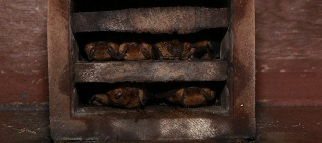 This bat house at Bob Blank's is home to dozens of bats. The view is looking up into the bottom of the house, which hangs on the side of Blank's home.