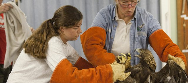 Prairie Park Nature Center naturalist Tasha Schultz, left, and nature education supervisor Marty Birrell prepare to vaccinate Lakota, the center's male golden eagle. Nine of the center's birds of prey were vaccinated Wednesday against West Nile virus, which they can get from mosquitoes. The birds are used in the center's education program and live outdoors, where they are more susceptible than humans to mosquito bites.