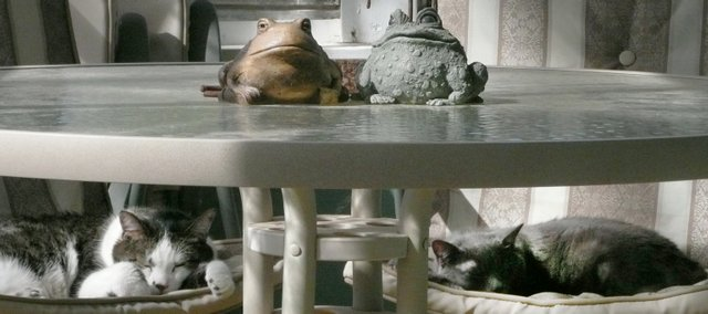 Karen Seibel caught this humorous juxtaposition of the family cats paired with a set of table-top pottery frogs. She used a simple point-and-shoot camera.