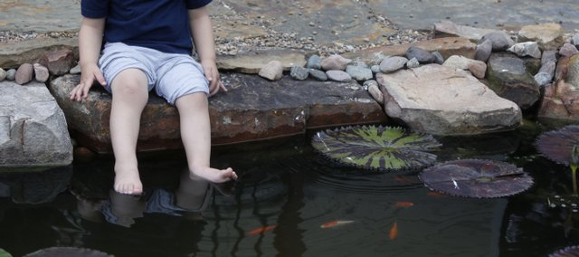 Water lilies dot the water where Jerry and Mary Kay Samp have a piece of paradise in their west Lawrence home, 4712 Carmel Place. Their grandson Ben Stammeyer dips his toes in the new pond, one of the featured tour stops on the second annual Tour Des Fleurs, which starts Friday.