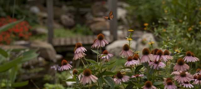 Monarch butterflies are attracted to the many flower types planted at the Brandon Woods garden. George Osborne Landscape Design maintains the garden.