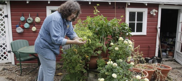 Andrea Zuercher, who lives in East Lawrence, has a small garden at her 100-year-old home. Zuercher tends the backyard garden, which features sweet peppers and cucumbers, along with tomatoes.