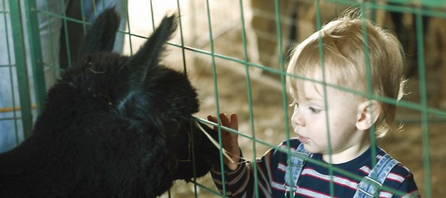Tommy Lintner, 17 months, Ottawa, pets an alpaca Saturday at Kaw Valley Alpacas in Tonganoxie. The farm will be open from 10 a.m. to 4 p.m. today.