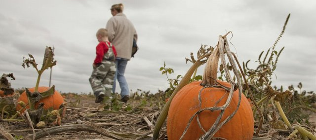 Kim Brooks walks with her grandson Kenny Brooks Monday at Schaake's Pumpkin Patch in this file photo. Pumpkin growers are looking forward to an average crop after last year yielded fewer pumpkins.