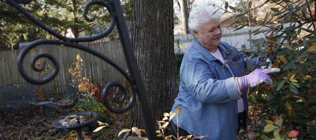 Lawrence gardener Pat Lechtenberg has several viburnums in her yard.