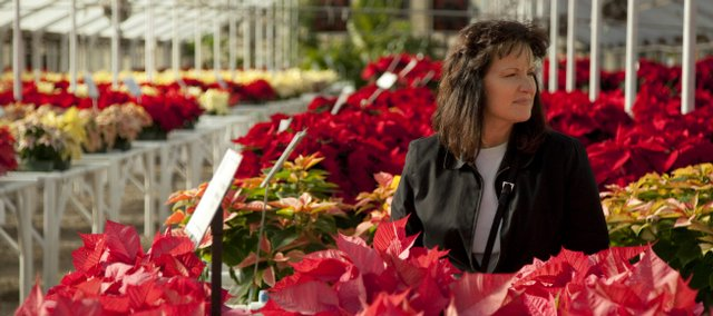 Lawrence resident Wanda Henry browses the many aisles and varieties of poinsettias at Sunrise Nursery and Garden Center, 15th and New York streets. According to Sunrise greenhouse manager Donna Gardner, the poinsettias should be positioned in a sunny window, kept at a temperature above 55 degrees and watered every three or four days.