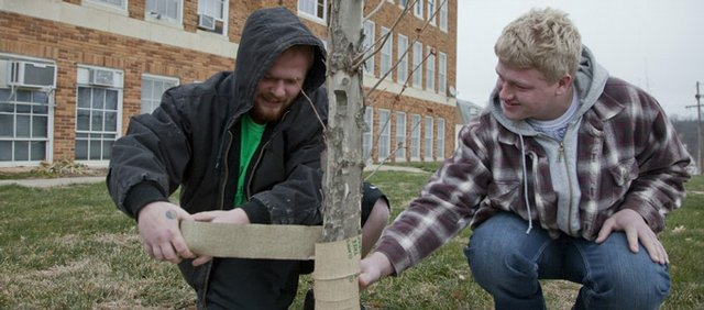 Mike Chapman, 18, left, and Tyler Gist, 17, wrap a young tree in front of the Keystone Learning Center in Lecompton, to prevent sun scald.
