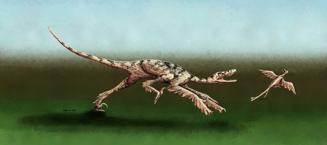 KU and chinese researchers have discovered a venomous, birdlike raptor that lived about 128 million years ago in China. A reconstruction of the turkey-sized raptor is here shown hunting.