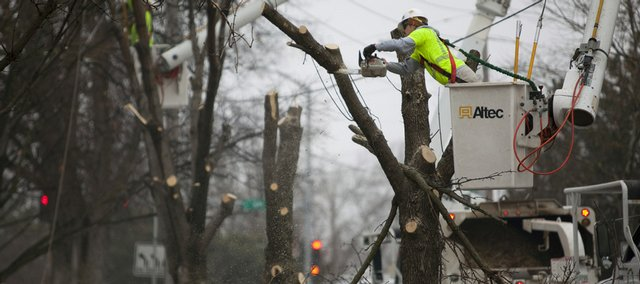 Workers with Wright Tree Service remove a row of trees on the west side of Kentucky Street at Watson Park. The trees were scheduled for removal to prevent interference with power lines that run along the outside of the park.