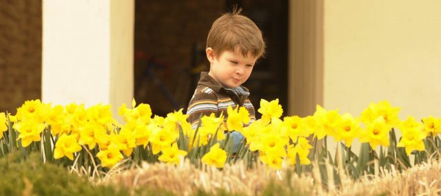 Daffodils are a sign of spring. Last year, Carter Schartz enjoyed a bed of blooms outside the Lawrence Public Library.