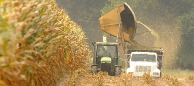 Kent Nunemaker cuts some corn for silage in this file photo. Researchers from KU and other schools around the state are collaborating on problems related to climate change and energy use in Kansas, including predicting how things might change for farmers.