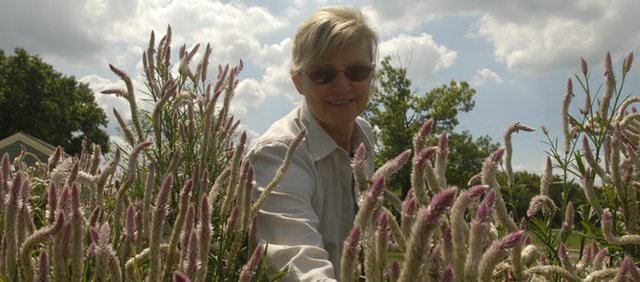 Master Gardener Michele Passman looks over some celosia in the Butterfly Garden at the Douglas County Fairgrounds. The garden and other new features were exhibits for the 2006 Douglas County Master Gardeners Fall Festival at the fairgrounds.