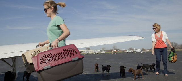 Sarah Owens, of Olathe, a volunteer pilot with Pilots 'N Paws, left, and Rhonda Schademann, of Perry, a program volunteer, herd eight Labrador puppies onto an airplane for a flight out of the Lawrence Airport to Wichita and then to Denver, where six of the pups have been adopted with help from Mile High Labrador Rescue. Schademann fostered the Labs, which had been abandoned, until arrangements could be made with the plane program. For Owens, this was her 12th flight and her 48th passenger dog.