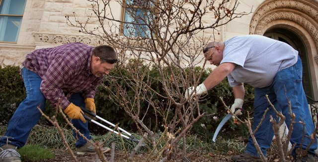 Nick Krug/Journal-World Photo.Douglas County maintenance workers Jim Rousselo, left, and Brad Betts are careful as they prune a knockout rose shrub Monday, March 29, 2010 on the west side of the Douglas County Courthouse.