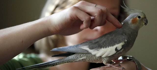 Jennifer Guild holds her bird, Jellybean, at her home in Richmond, Va. Jellybean is Guild's nippy childhood bird.