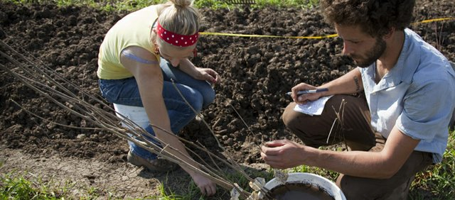 """Ashton Martin, farm manager for the 12-acre permaculture test site at the Karlin family farm, checks on trees that will be planted as part of a multi-tiered """"food forest."""" Lindsey Yankey, left, helps to plant some of the trees."""