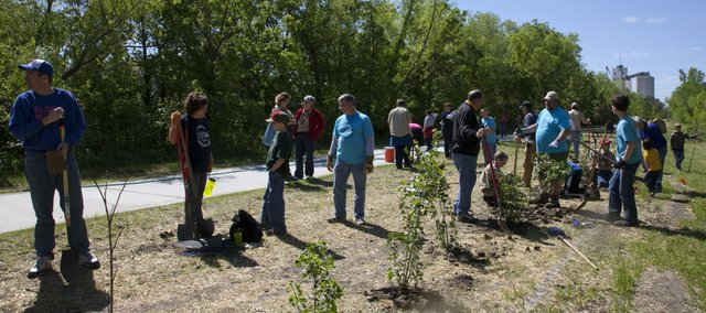 As part of the 100th Anniversary of Boys Scouts, area Cub and Boy Scouts planted more than 300 trees and shrubs along a stretch of the Burroughs Creek Trail on Saturday.
