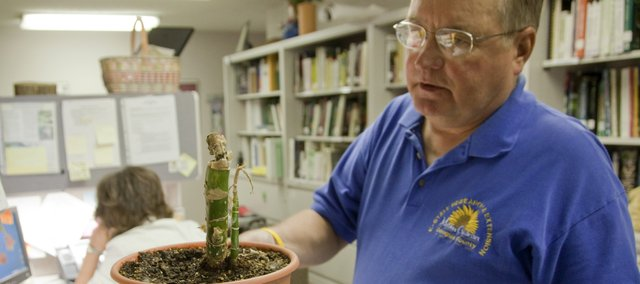 Stan Ring, horticulture program assistant at the Extension Office, looks over a dieffenbachia houseplant in bad shape at the Douglas County Extension Service offices. Residents can drop off items or call the Master Gardener hotline to get answers regarding gardening plants, problems and pests.