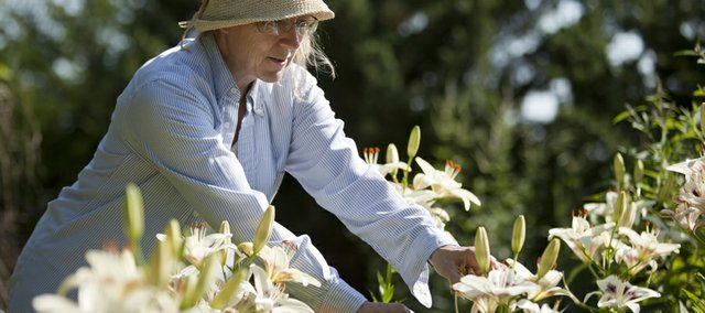 Susan Rendall clips away at a cluster of Asiatic lilies in her garden northeast of Lawrence.