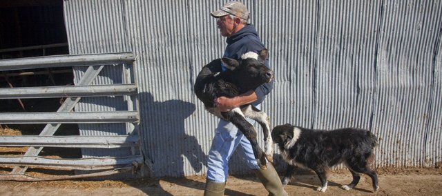 Tim Iwig, Tecumseh, who owns Iwig Family Dairy, carries a newborn calf on his dairy farm in October 2009.