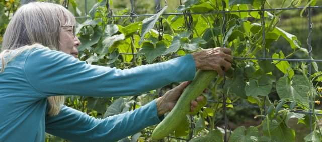 Connie Spitz picks a cucumber from her garden.
