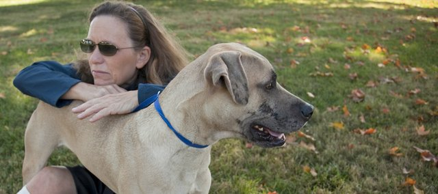 "Certified trainer Jeanette Wisdom works with ""Smudge,"" a one-year-old greyhound mix that she refers as a ""settled dog"" at the Lawrence Humane Society.  Smudge has been at the shelter since being a puppy and Wisdom feels he will be ready for adoption any day.."