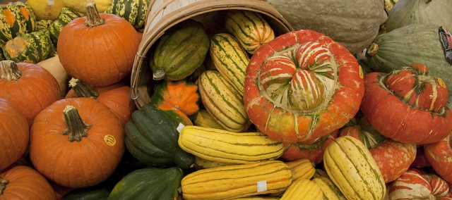 Winter squash come in all shapes and sizes from cute pie pumpkins to the exotic turbans and carnival acorn squash. Each has a unique flavor and texture as different as its appearance.