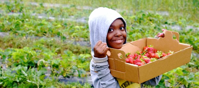 Cordley second-grader Chloe McNair helps pick strawberries at Wohletz Farm Fresh, 1831 N. 1100 Road. The berries will be used in a dessert prepared for Cordley students Friday as part of a special lunch put on by the Farm-to-School program.