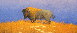 """""""Kansas Pride, the American Bison"""" by Gary Ozias, the Kansas plain, rough and independent, not domesticated and free. This painting is part of a collection commissioned by the Kansas Lottery to celebrate the state's 150th birthday and was selected to be featured on the scratch ticket."""
