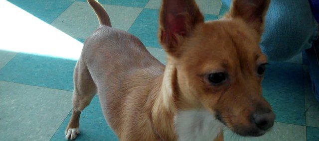 Our first entry in our weekly shelter pet spotlight is a spirited terrier mix.