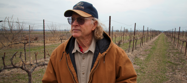 Greg Shipe, owner of Davenport Orchards and Winery west of Eudora, keeps a keen eye on his variety of grape vines for any sign of damage from herbicides sprayed by other farmers and landowners. Herbicides with the compound 2,4-D, can be detrimental on his crop if sprayed at the wrong time of year.